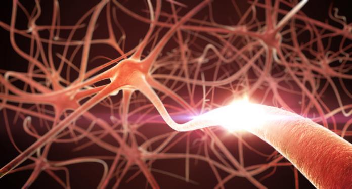 BDNF Promotes Brain Health