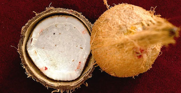 The Amazing Health Benefits Of Coconuts