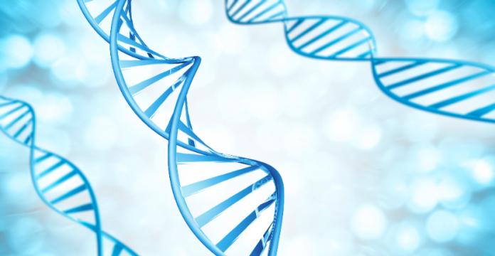 What is a MTHFR Gene Mutation?