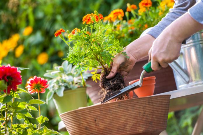 Ten Uses For Epsom Salt In Your Garden