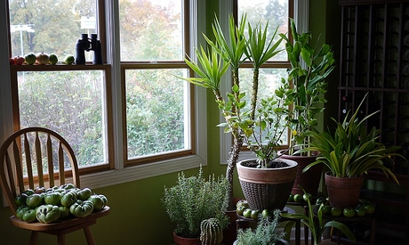 Houseplants as Indoor Air Purifiers: Does It Work?