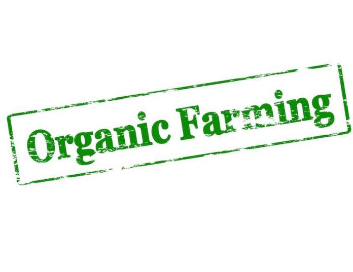 Why Choosing Organic Benefits The Health of Farm Families