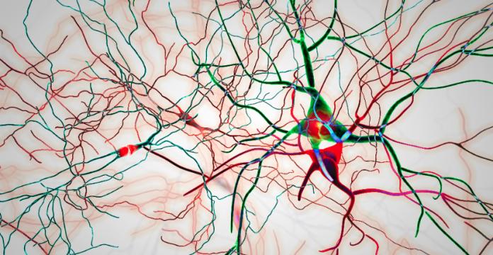 Protein in Parkinson's Disease Causes An Autoimmune Response
