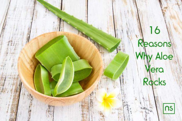 16 Reasons Why Aloe Vera Rocks 1