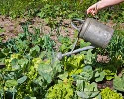 Gardening Tip: Grow Your Own Herbs