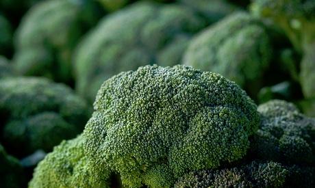 The USDA Organic Program Faces Criticism
